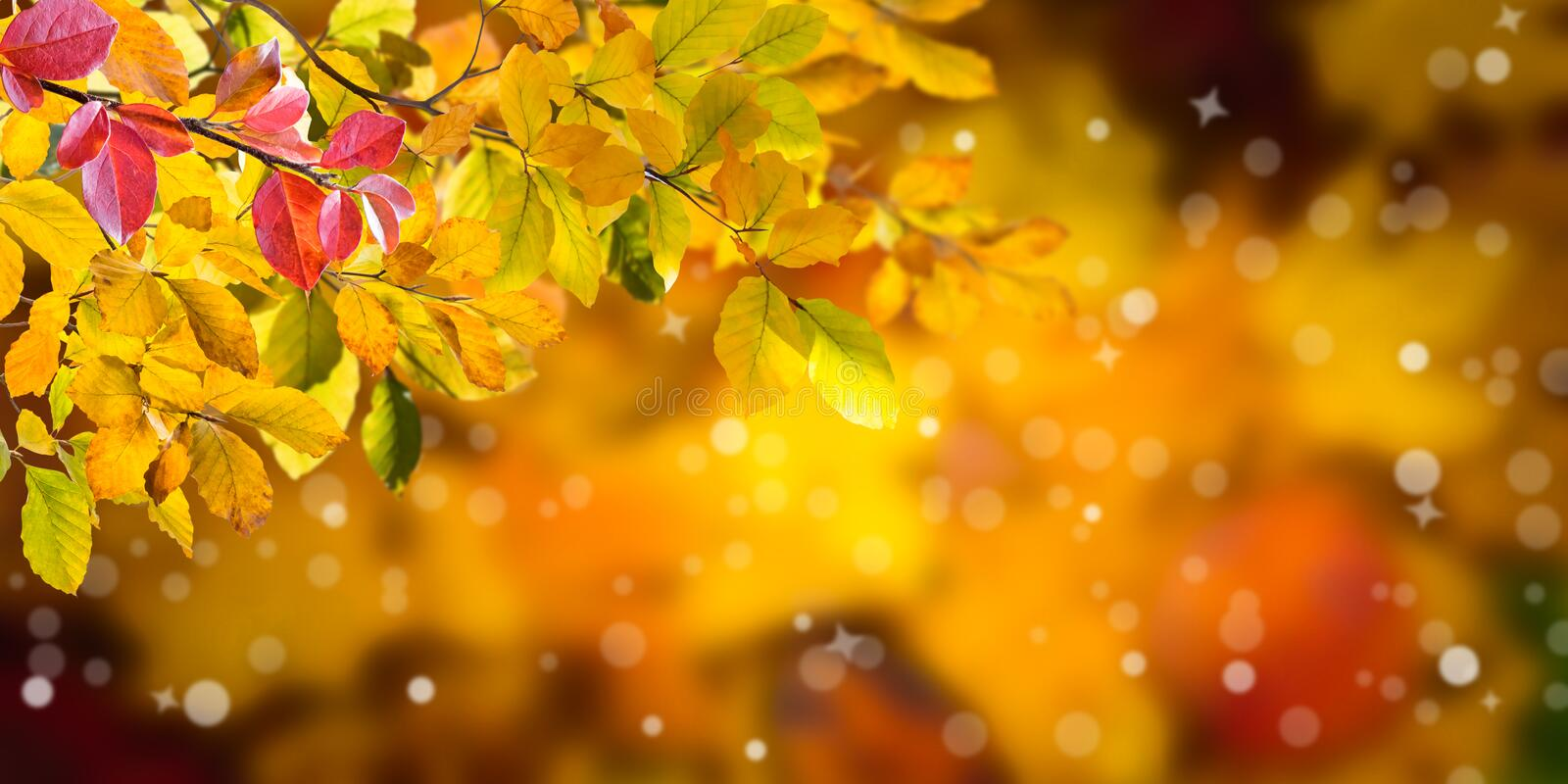 Nature autumn background royalty free stock images