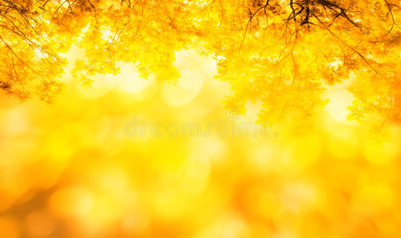 A nature autumn background with yellow and orange autumn leaves. Nature autumn background with yellow and orange autumn leaves stock photo