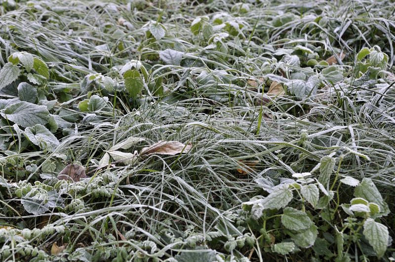 Nature in autumn. Frost on the grass. royalty free stock photos