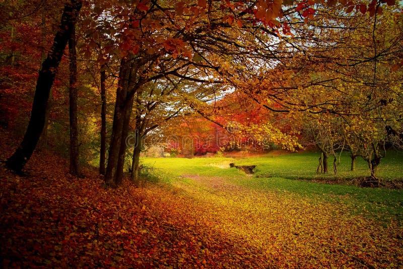 Nature, Autumn, Leaf, Woodland royalty free stock images