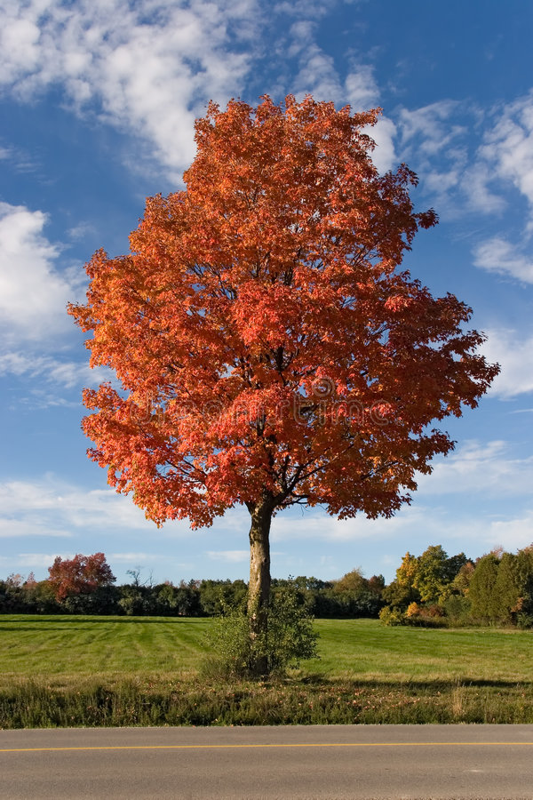 Download Nature autumn tree 01 stock photo. Image of view, autumnal - 305472