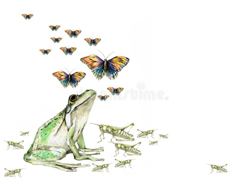 Nature Background. A frog, grasshoppers, and butterflies, illustrated on a white background royalty free illustration