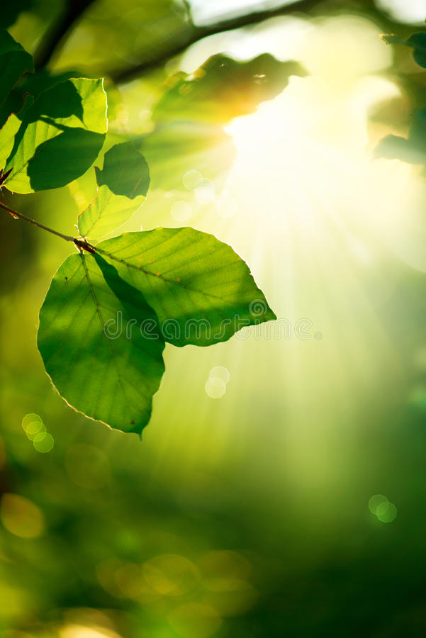 Nature Background. Green Leaves and Sunbeams stock images