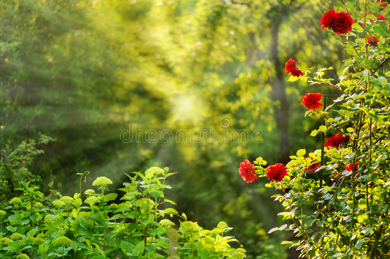 Download Nature Background Stock Images - Image: 28762734