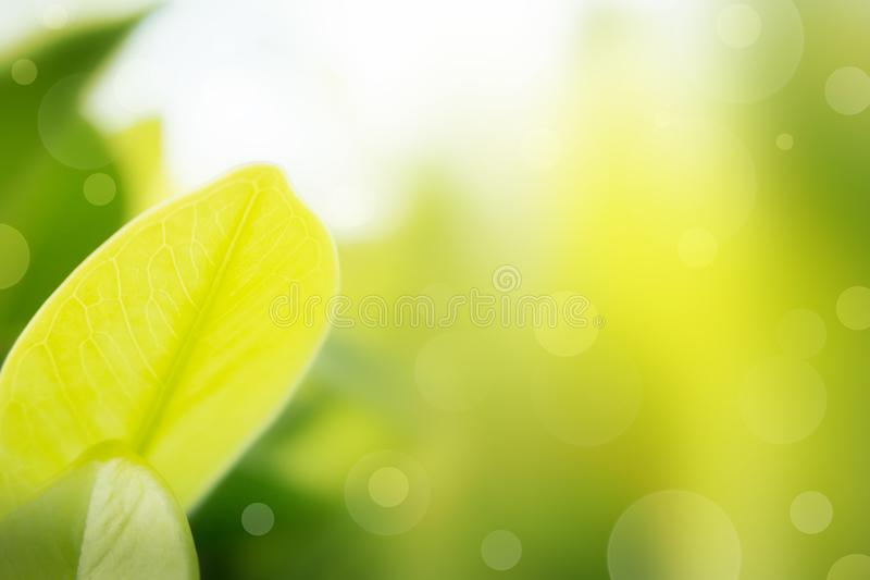 The nature background abstract, blur nature abstract. The nature background abstract, blur nature background, green leaf in nature background stock photo