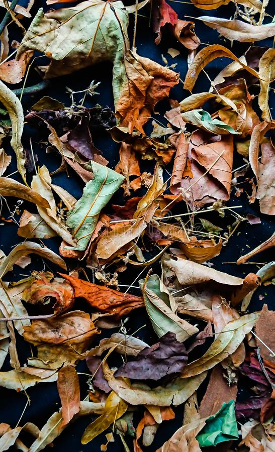 Nature background bark and leaves for mobile phones. A beautiful and full naturistic topic background for your mobile telephone stock image