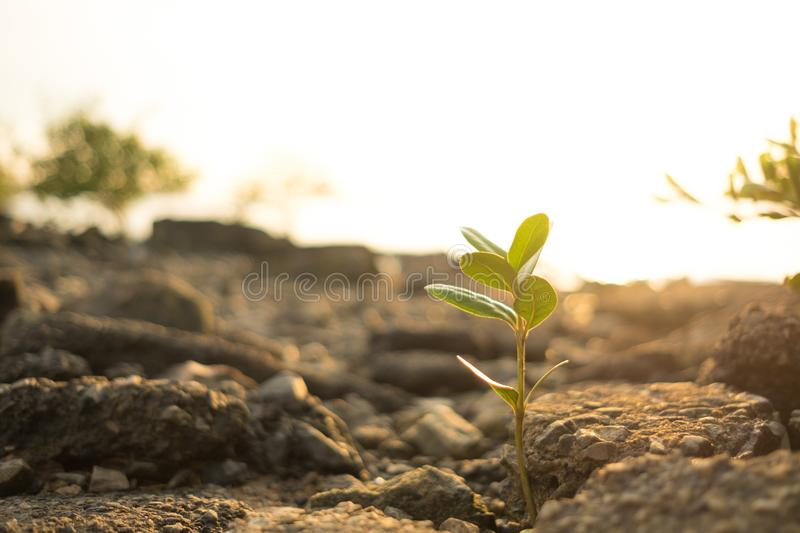Nature background closeup small plants with stone, sunshine and royalty free stock photo