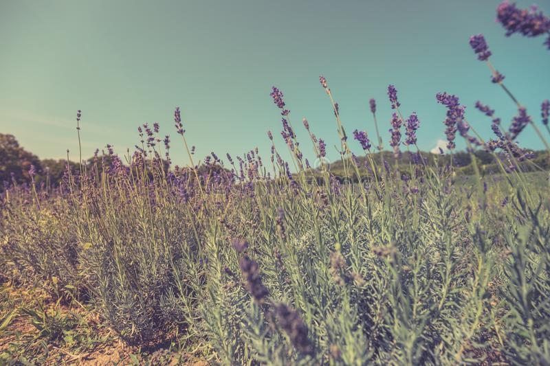 Summer closeup flowers and meadow. Bright landscape. Inspirational nature banner background. royalty free stock image