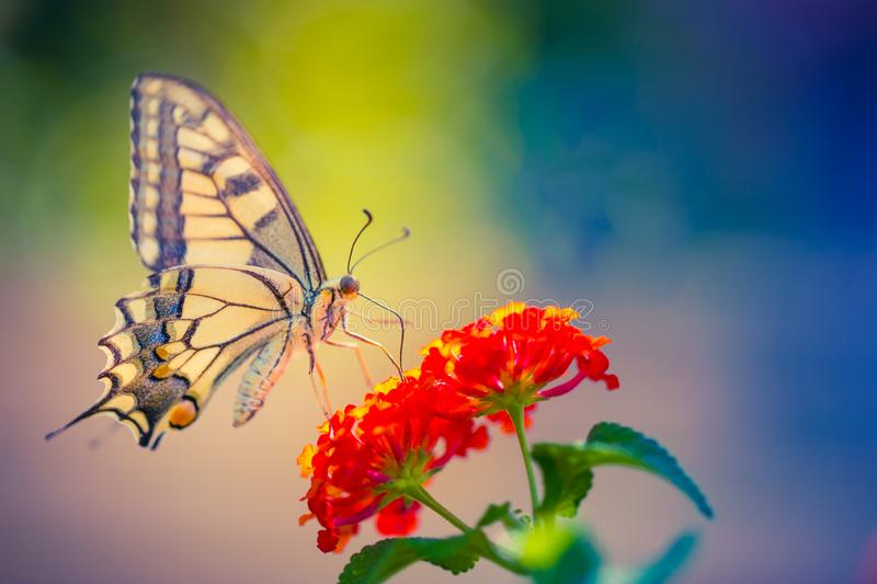 Summer nature view of a beautiful butterfly with colorful meadow. Wonderful summer scene under sunlight. Nature background concept and beautiful summer meadow stock image