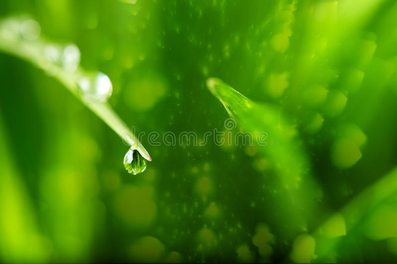 Nature background with drop stock photo