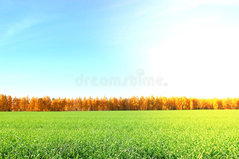 Nature background. Green grass field against a blue sky with wispy white cloud stock photo