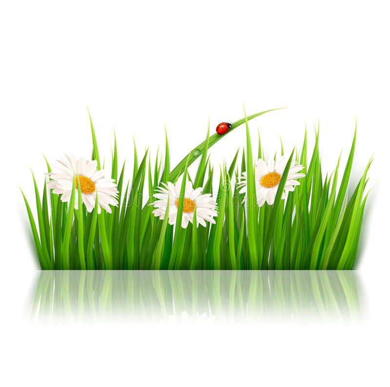 Nature background with green grass and flowers stock illustration
