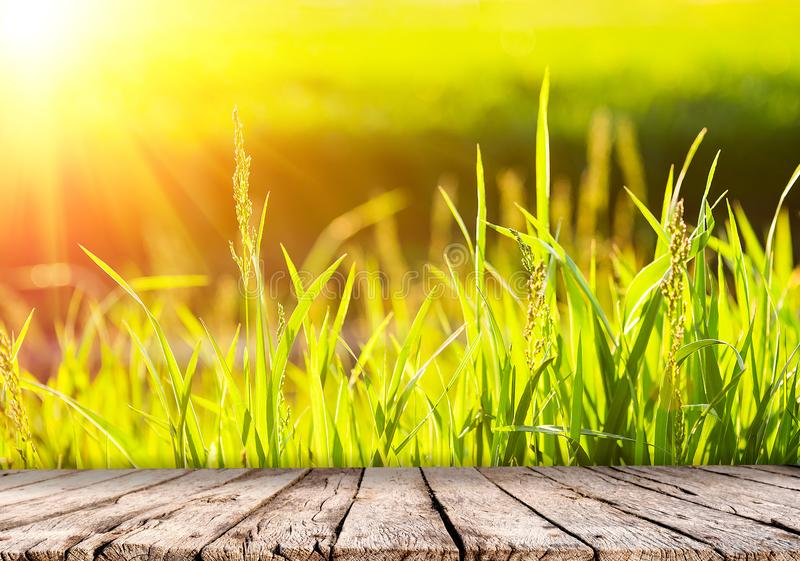 Nature background with green grass at sunset and wooden table top stock images