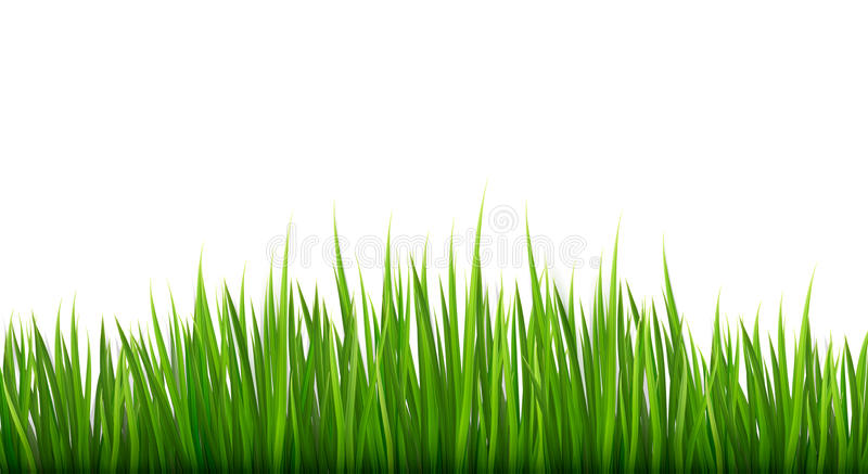 Nature background with green grass. stock illustration