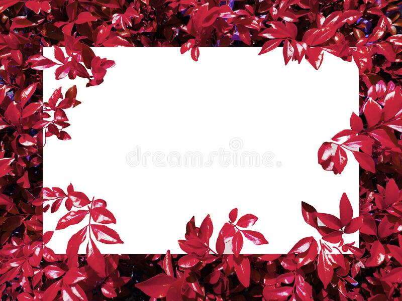 Nature Background label,Red leaves,For pasting characters,Natural frame royalty free stock photos