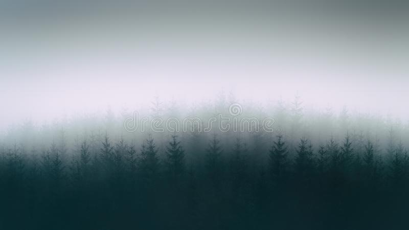 Nature background with moody forest. Nature background with a moody forest stock photos