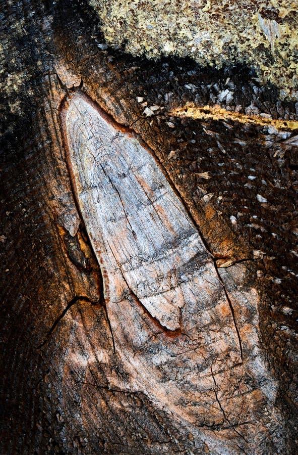 Sawn twig on a tree trunk stock photos