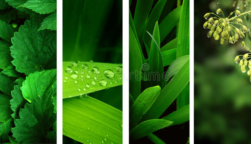 Nature banners. Collection of nature banners. Rain drops on a green leafs stock photos