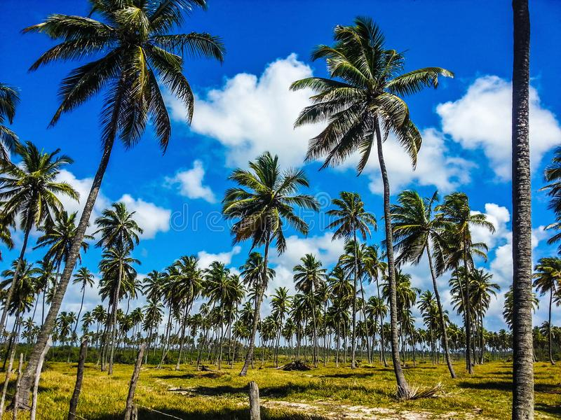 NATURE AND BEACHES. FORTALEZA, CEARÁ, BRAZIL, BEACHES AND NATURE stock photos