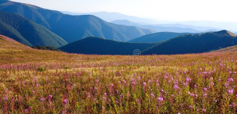 Nature, beau paysage en montagnes carpathiennes image stock