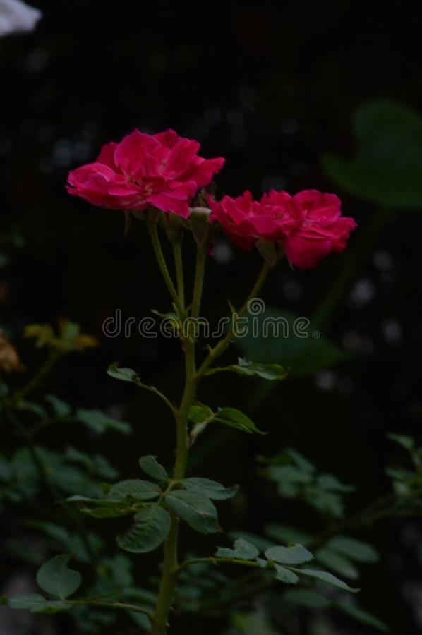 Nature is beautiful. Manual click with 800 iso minimum exposure stock photos