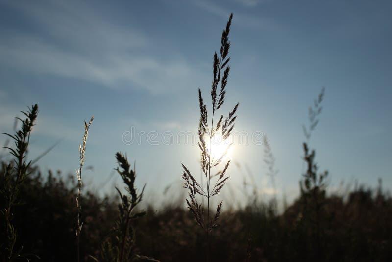 Nature. stock photos
