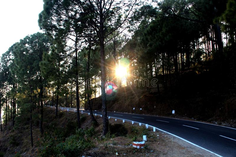 Nature. Beautiful greentree sunset road stock photos