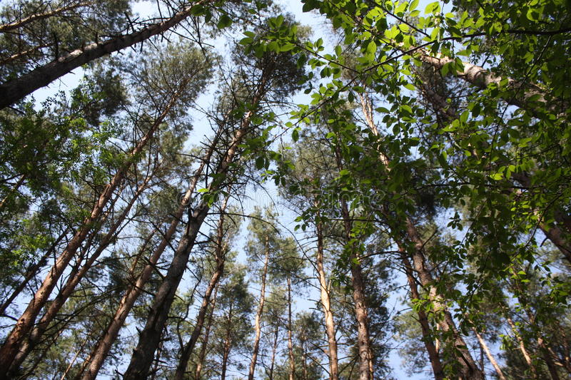 Trees wallpaper royalty free stock photography