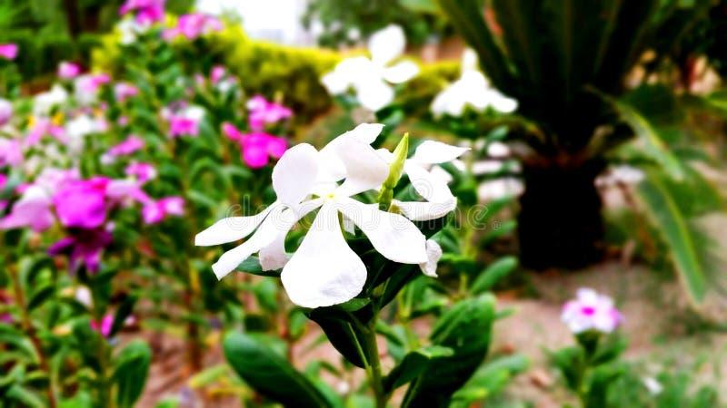 Nature beauty flower stock photo