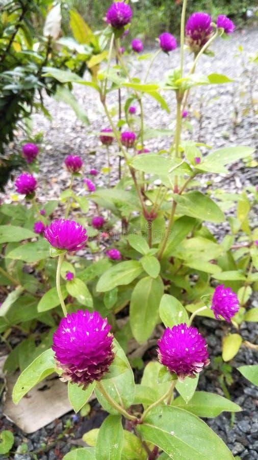 Nature& x27; belleza de s, flores foto de archivo libre de regalías