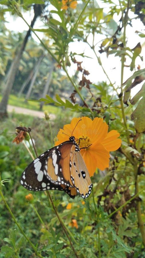 Nature& x27; belleza de s, mariposa imágenes de archivo libres de regalías