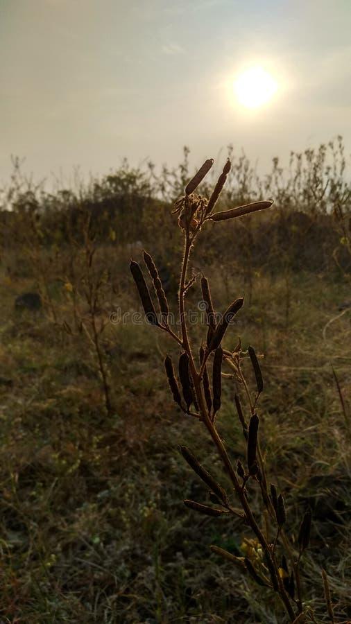 Nature& x27; bellezza di s immagine stock