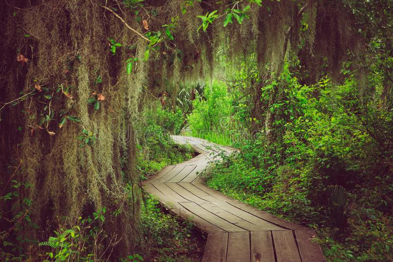 Nature Boardwalk in New Orleans. Walking path along the trees in New Orleans swamp preserve royalty free stock photography