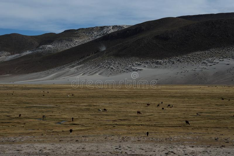 Nature bolivienne image stock
