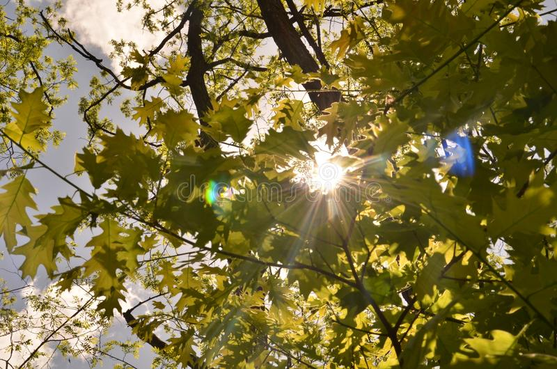 Nature, Branch, Leaf, Tree Free Public Domain Cc0 Image