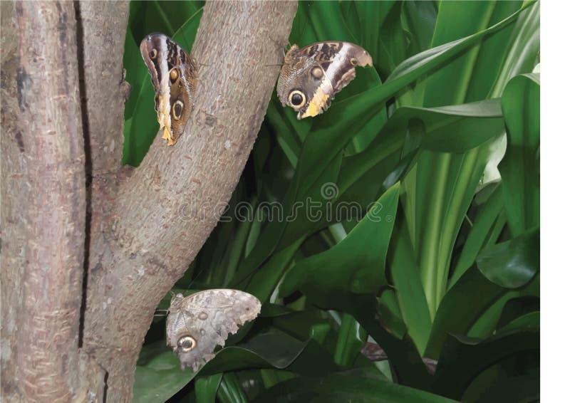 Nature buttefly images libres de droits