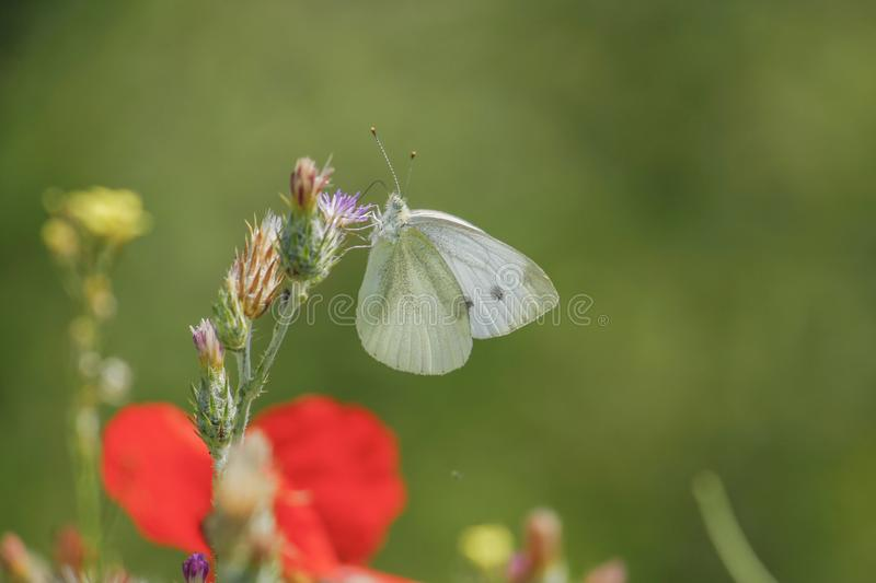 Nature on butterfly stock photo royalty free stock photography