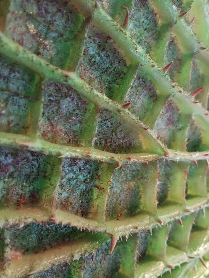 Nature cachée photo libre de droits