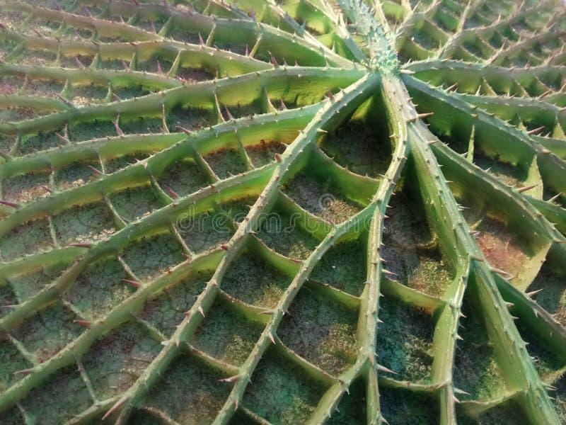 Nature cachée photos libres de droits