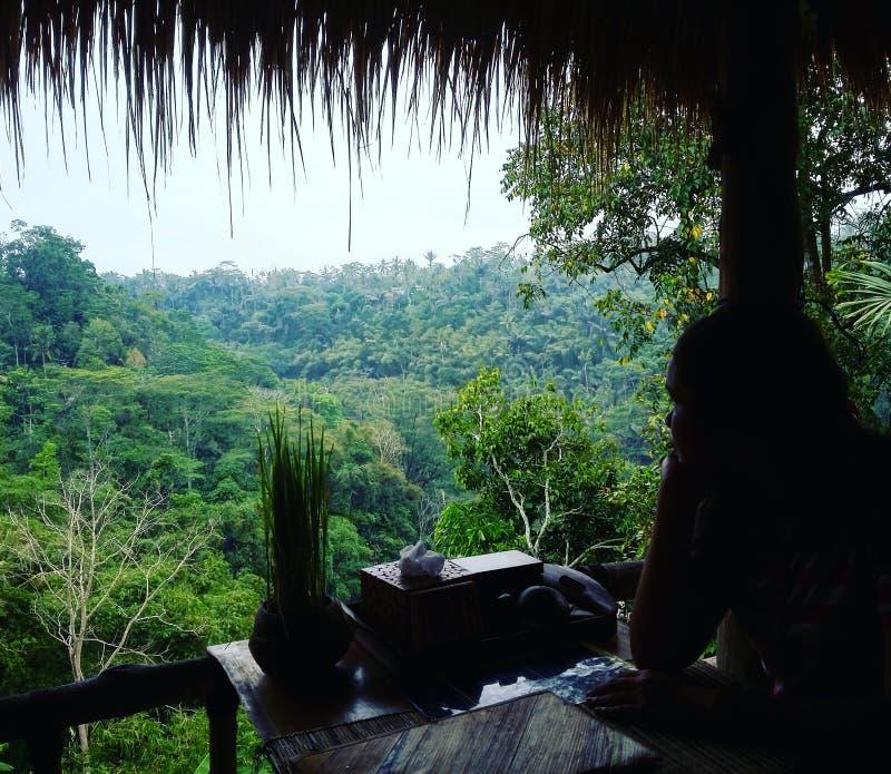 Nature calme Bali Indonésie de café photo stock