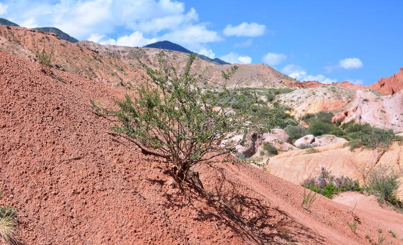 Nature of the canyon in Kyrgyzstan. Red mountains against the blue sky. Bush in dry soil. stock photo