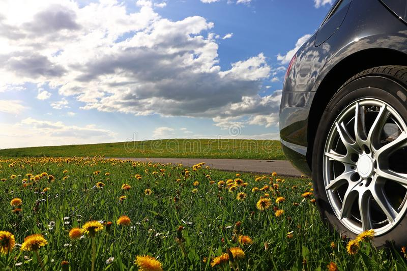 A black car stands in a dandelion meadow stock photos