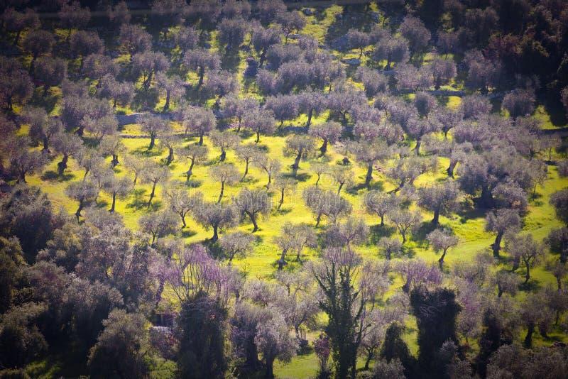 Nature, champ de paysage avec des arbres, pré et mimosas photo libre de droits