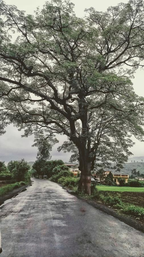 Nature, champs et prés photographie stock