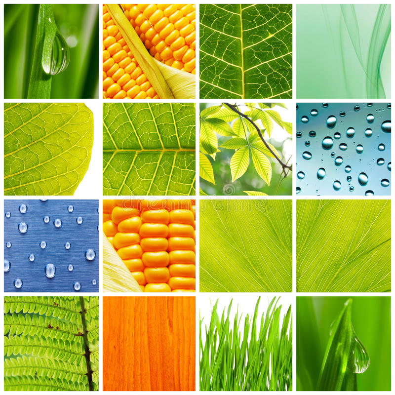 Free Nature Collage Royalty Free Stock Photography - 10869697
