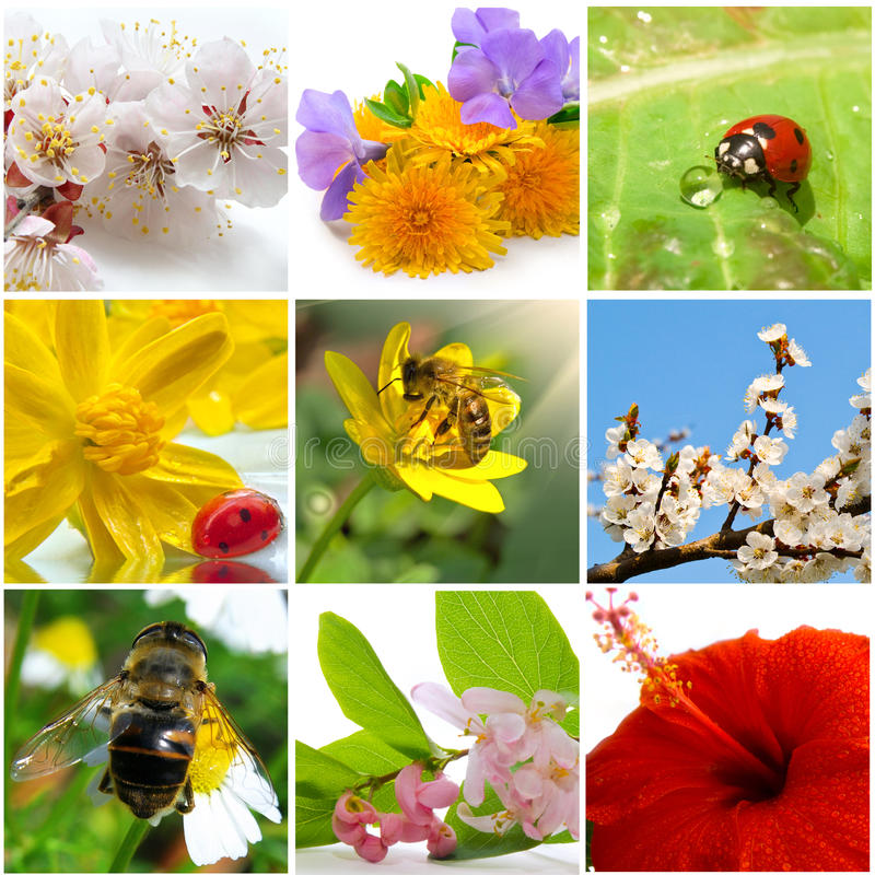 Nature collage. Beautiful nature collage of nine photos stock images