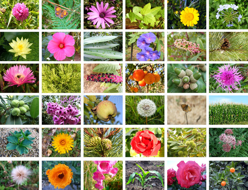 Nature collage stock photo