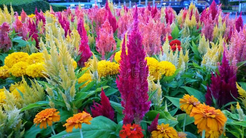 Nature colorée images libres de droits