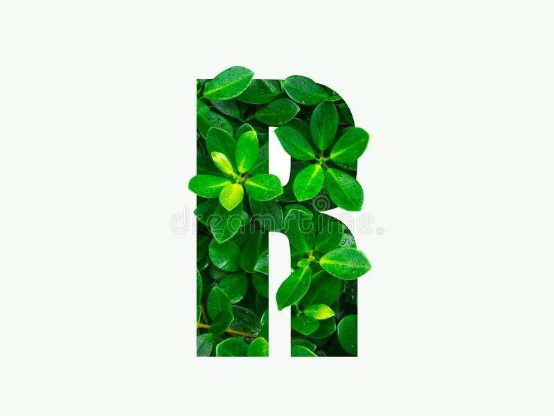 Nature concept alphabet of green leaves in alphabet letter R.  royalty free stock photography