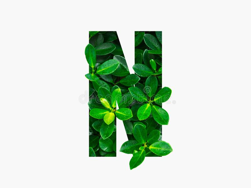 Nature concept alphabet of green leaves in alphabet letter N.  stock images